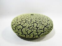 Organic Randy O'Brien Ceramic Lichen Vessel Lime Volcanic Glaze Arizona Pottery