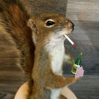 FUNNY SQUIRREL  TAXIDERMY MOUNT !