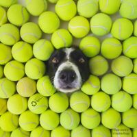 100 used tennis balls LOW COST DOGGIE BALLS FREE SHIP SAVE 10%