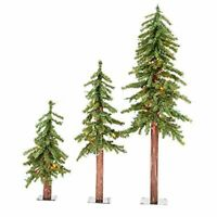 Vickerman Natural Alpine Tree Set lit by 185 Multi colored lights with three tr