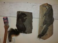 Pair Taxidermy Squirrel Mounts Log Cabin Decor Novelty Whitetail Deer Chipmunk