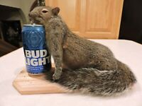 Drunken Taxidermy Squirrel Mount Log Cabin Decor Novelty Whitetail Deer Chipmunk