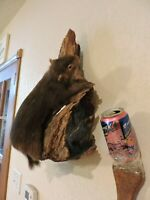 Vintage Taxidermy Squirrel Mount Log Cabin Decor Novelty Whitetail Deer Chipmunk