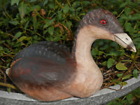 PIED BILL GREBE VINTAGE DUCK DECOY HAND CARVED WOOD