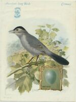 1926 Singer Sewing trade card American Song Birds Catbird