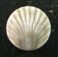 Scarce Antique China TWISS Shell Button, Mottled Tan Body