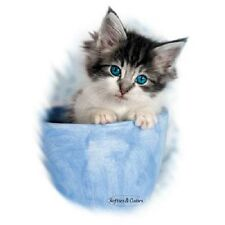 Tabby and White Kitten Tshirt  Sizes/Colors