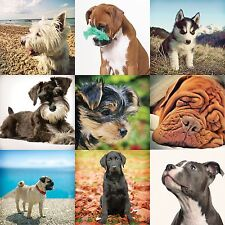 Animal Greetings Cards - All occasions