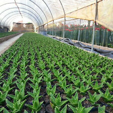 High 20 Pcs Aloe Vera Seeds House Plants Herbal Succulent Garden Rare Plant