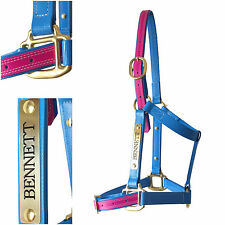 PVC Horse Halter/Headstall - Cyan Blue & Cerise Pink - With Nameplate