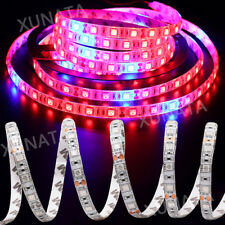 5m SMD 5050 Led strip plant grow light Red Blue greenhouse Hydroponic Lamp 12V