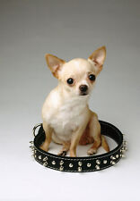 Art print POSTER Chihuahua Puppy Sitting Inside Large Collar