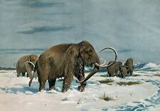Art print POSTER / CANVAS Painting of Wooly Mammoths by Wilhelm Kuhnert