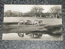 GREVY ZEBRA  WHIPSNADE PARK ZOO    PHOTO POSTCARD VINTAGE POSTED   1960s ??VGC