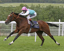 FRANKEL RIDDEN BY TOM QUEALLY 01 (HORSE RACING) PHOTO PRINT