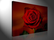 Stretched Canvas Print - RED ROSE 3 Macro Photography Large Wall Art s3410