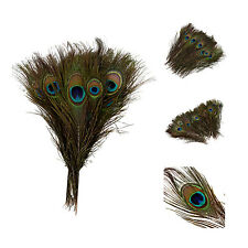 Pack of 50pc Natural Peacock Feathers 10-12''