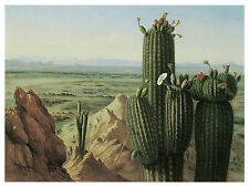 1356 Desert Nature wall Art Decoration POSTER.Graphics to decorate home office.