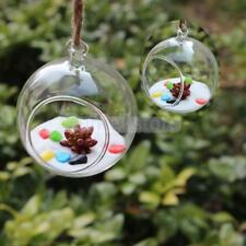 Clear Ball Shaped Glass Flowers Vase Terrarium Container Garden Hanging Decor