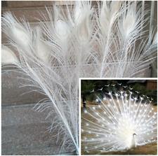 Beautiful white natural peacock feathers 70-80 cm 28-32 inches Free shipping