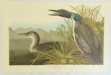 The Birds of America. Audubon. Great Northern Diver or Loon. Amsterdam Edition.
