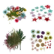 Real Pressed Dried Flower Leaves For Resin Jewelry Craft DIY Phone Case Deco