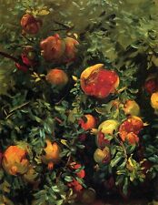 Sargent pomegranates-majorca-1908  Paper or Canvas A2 A3 giclee Print Picture