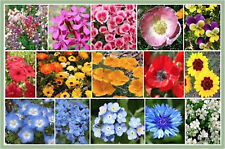 Wildflower Seeds - Shorty Low-Grow Wildflower Annual/Perennial No. of Species 15