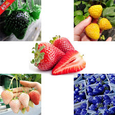100PCS Strawberry Seeds Organic Fruit Seed 5 Kinds For Garden Heirloom