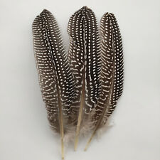 Brand new 10-100pcs beautiful guinea fowl wing feather 6-8 inches / 15-20 cm