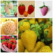Heirloom 6 Types  Delicious Strawberry Seed 100 Seeds Plants Home Garden