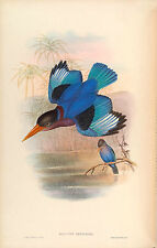 New Vintage John Gould Art Print or Poster #1 Repro Birds Giclee Archival Inks