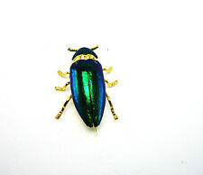 GENUINE BEETLE SCARAB REAL NATURAL INSECT BRASS PINS BROOCH Gift Collectible