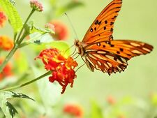Fantastic Macro Butterfly Flower Nature Wall Print POSTER AU