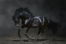GALLOPING BLACK HORSE CANVAS PRINT FRAMED or ROLLED choose size A2,A1,A0