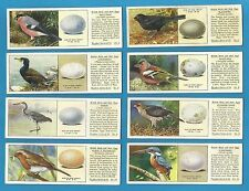 Ty - Phoo Individual  cards - BRITISH BIRDS AND THEIR EGGS - 1936