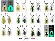 Real Insect Key Ring Chain Lucky Charm CLEAR/GLOW Scorpion Beetle Hornet Bug