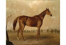 """EDWARD TROYE """"Asteroid At Stud"""" BROWSE our eBay shop! various SIZES, BRAND NEW"""