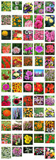 Flower Seeds for Your Sparkling Border -  A Further 60 Different Varieties