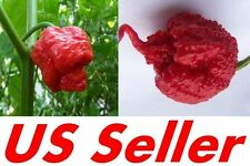 30~40+ NuMex Big Jim Chili Pepper Seeds, Trinidad Moruga Scorpion Pepper Seeds