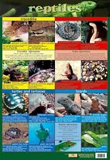 New Reptiles Snake, Rattle and Roll Mini Poster