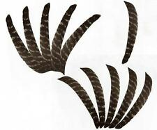 New 7.8'' Full Length Natural Barred Turkey Feathers - Archery Fletching Hunting