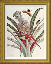 'Pineapple (Ananas) With Surinam Insects' by J Mulder Framed Graphic Art