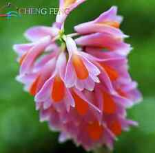 Dendrobium Seeds, Potted Seed Flower In Bonsai Rare Orchid Plants MIX color