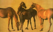 THOROUGHBRED STYLE: Racing Dynasties - the Horses, the Owners, the Studs,1987