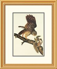 Global Gallery Barred Owl by John James Audubon Framed Painting Print