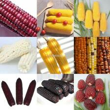 10 Particle Popcorn/Sweet/Pineapple/Strawberry Corn Seeds Vegetable N98B