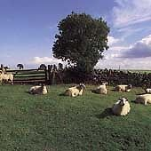 The KLF - Chill Out (2000)