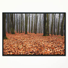 'Enchanted and Magical Fall Forest' Framed Photographic Print on Wrapped Canvas