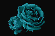 Teal Roses Black Canvas Pictures Modern Flower Prints Home Wall Art All Sizes